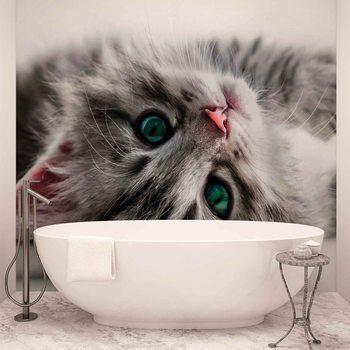 Cat Kitten Poster Mural