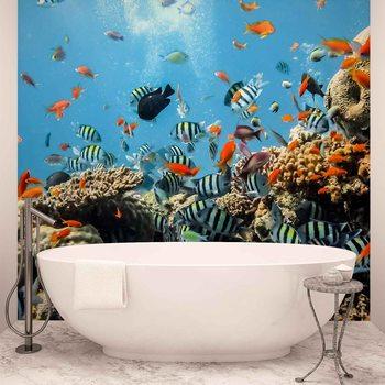 Coraux des poissons de mer de la mer Poster Mural
