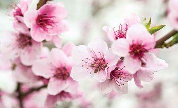 Fleurs de fleurs de cerisier Poster Mural