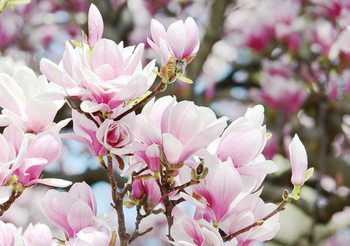 Fleurs Magnolia Poster Mural