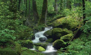 Forest Waterfall Rocks Nature Poster Mural