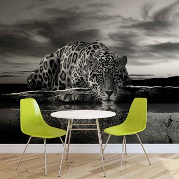 Leopard Feline Reflection Black Poster Mural