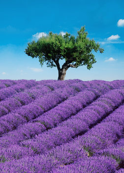 PROVENCE Poster Mural