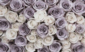 Roses Flowers Purple White Poster Mural