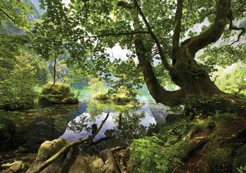 Tree Lake Nature Poster Mural
