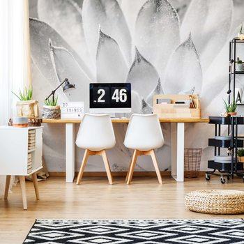 Aloe Plant Black And White Wallpaper Mural
