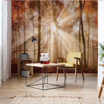 Autumn Trees Forest Sunshine Wallpaper Mural