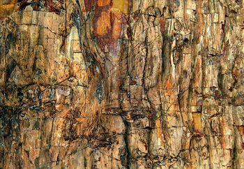 Bark Wallpaper Mural