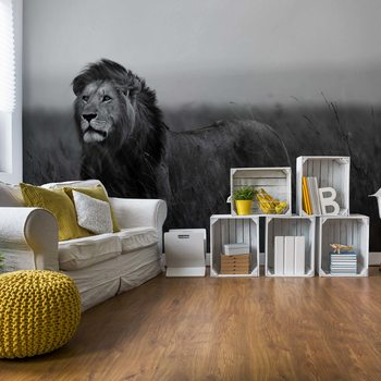 Black And White Lion Wallpaper Mural