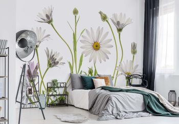 Cape Daisies Wallpaper Mural