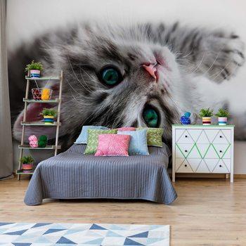 Cute Kitten Wallpaper Mural