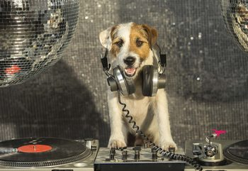 Dog Dj Wallpaper Mural