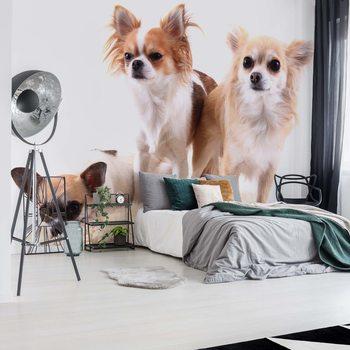 Dogs Wallpaper Mural