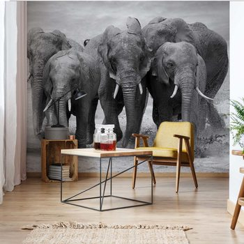 Elephants Black And White Animals Wallpaper Mural