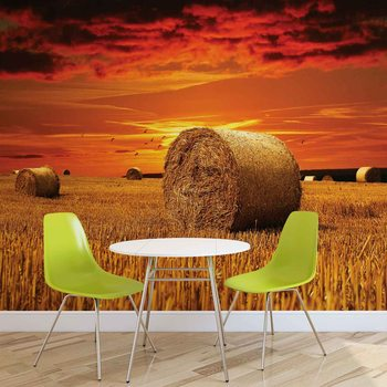 Field Gold Pasture Yield Nature Wallpaper Mural