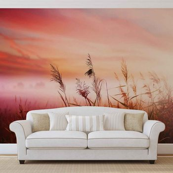 Field Sunset Sunrise Wallpaper Mural