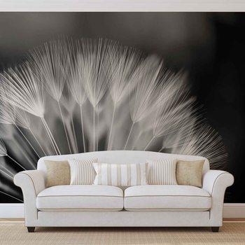 Flowers Dandelion Nature Wallpaper Mural