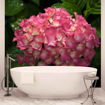 Flowers Hydrangea Pink Wallpaper Mural