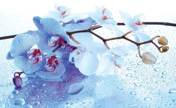 Flowers Orchids Nature Drops Wallpaper Mural