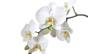 Flowers Orchids Nature White Wallpaper Mural