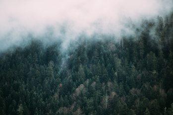 Wallpaper Mural Fog over the forest