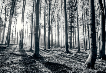 Forest - Black and white Wallpaper Mural