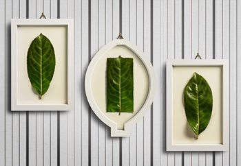Framed Nature Wallpaper Mural