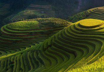 Gold Rice Terrace Wallpaper Mural