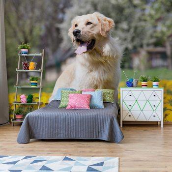 Golden Retriever Dog Wallpaper Mural