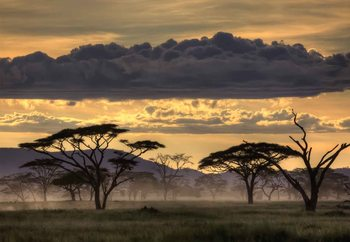Good Evening Tanzania Wallpaper Mural