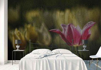 Kiss Of The Rain Wallpaper Mural