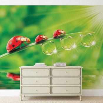 Ladybird Wallpaper Mural