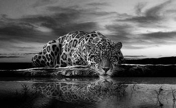 Leopard Feline Reflection Black Wallpaper Mural