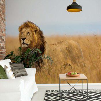 Lion Wallpaper Mural