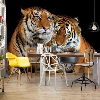 Loving Tigers Wallpaper Mural