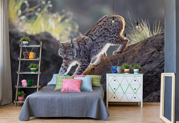Lynx At Sunset Wallpaper Mural