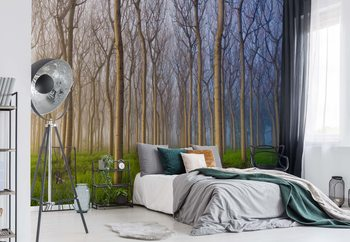 Morning Of The Forest Wallpaper Mural