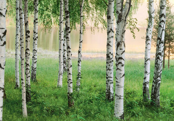 NORDIC FOREST Wallpaper Mural