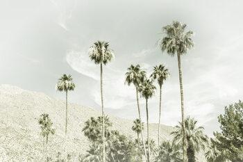 Palm Trees in the desert | Vintage Wallpaper Mural