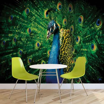 Peacock Bird Feathers Wallpaper Mural