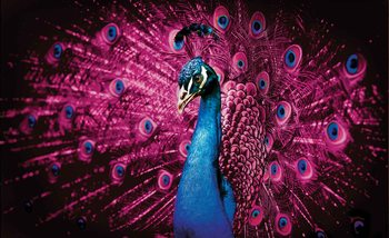 Peacock Bird Pink Feathers Wallpaper Mural