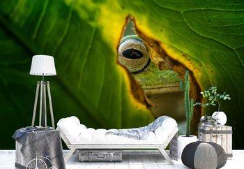 Peeking Frog Wallpaper Mural