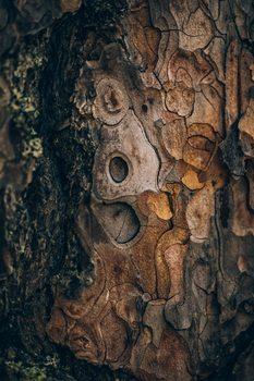 Wallpaper Mural Pine wood