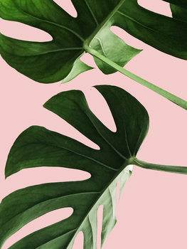 Pink palm Wallpaper Mural