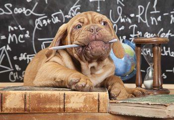 Puppy Professor Wallpaper Mural