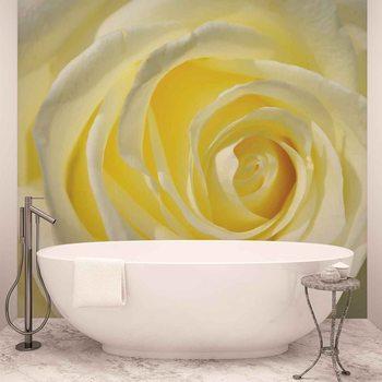 Rose Flower White Yellow Wallpaper Mural