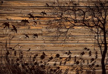 Rustic Birds And Tree Silhouette Wood Plank Texture Wallpaper Mural