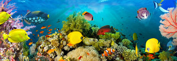 Sea Corals  Wallpaper Mural