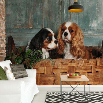 Spaniel Dogs Wallpaper Mural