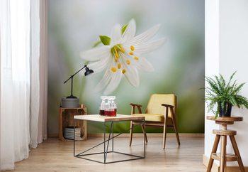 Spring Stitchwort Wallpaper Mural